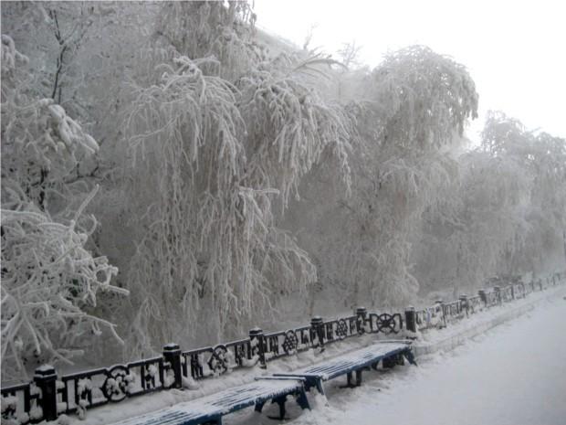зимой деревья белые